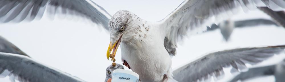 Ole Martin and the sea gulls