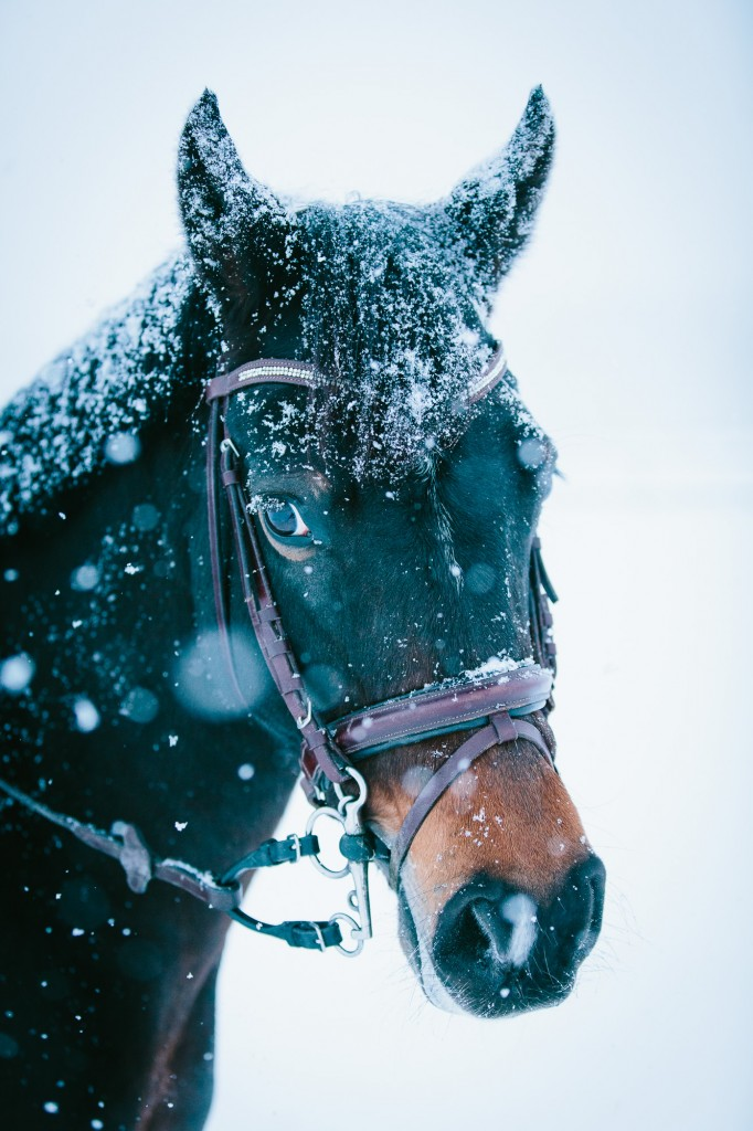A happy horse in the snow...